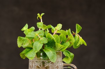Fresh mint in glass mug on black background closeup macro