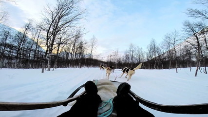 POV dogsledding animal team working winter tourist transportation Norway