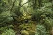 Brazil rainforest - Serra dos Orgaos