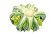 Isolated Romanesque Cauliflower