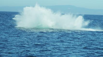 Breaching Humpback whale aquatic mammal, coastal waters Pacific ocean, USA