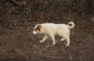 Stray puppy in search of mom walking through sinister place