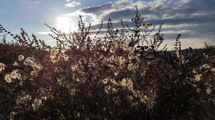 I fiori d'inverno
