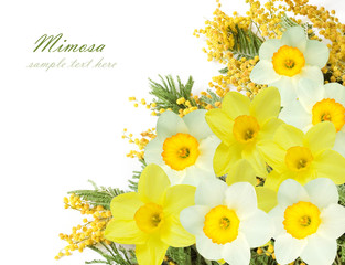 Mimosa and narcissus flowers