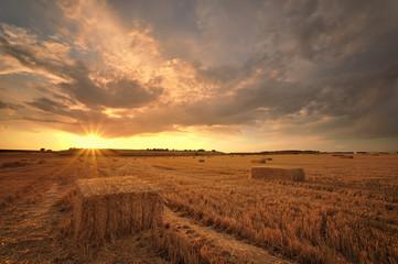 Sol y cosecha