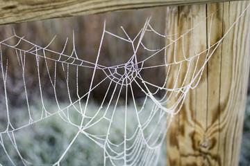 Cobweb with ice