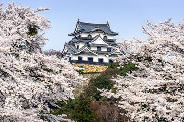 Hikone Castle in the Spring in Hikone, Japan