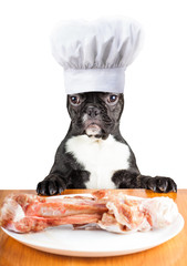 french bulldog dog