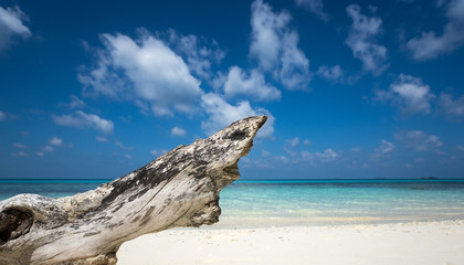 Deadwood on white sand beach of paradise island