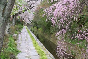 Kyoto Philosophers Way