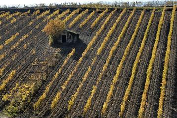 Toscana, coltivazioni