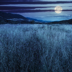 meadow with high grass in mountains at night