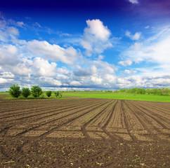 plowed field with little green shots