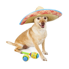 Happy Mexican Chihuahua Cross Dog