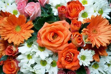 rose gerbera daisy chrysanthemum