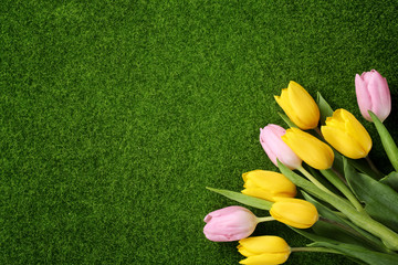 Tulips on meadow