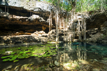 X-Batun Cenote - turquoise fresh water with water lilies and roc