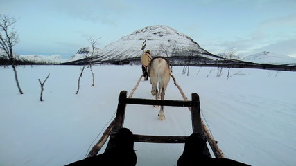 POV Handler Norwegian Reindeer sledge snow covered landscape