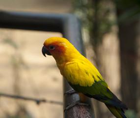 Sun Genoa Court Bird