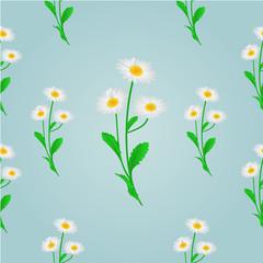 Seamless texture daisy spring background vector