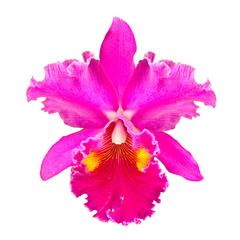 Red cattleya orchid, flowers