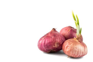 Three onions with young shoots, flushed to the right