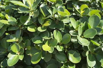Plants that grow in Dubai