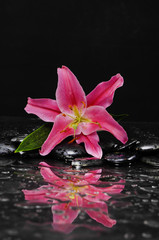 Pink lily with therapy stones