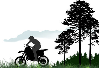 silhouettes of man on motorcycles near pines