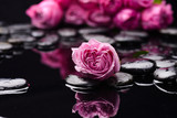 Rose and black wet pebbles