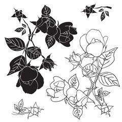 Four black and white roses. Vector illustration.