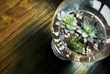 Succulent in Glass Vase for Decoration - 77050868