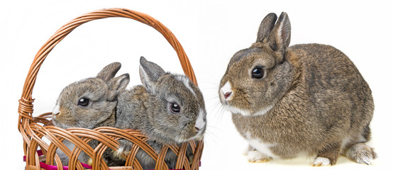 two little rabbits in a basket and it´s mother