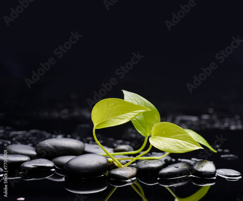 Poster Spa Green leaf on wet background