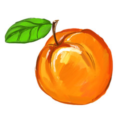 Peach Vector illustration of ink hand drawn  painted