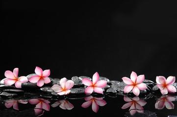 spa concept-six frangipani and wet stones
