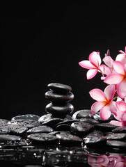 Branch of frangipani with stacked stones on wet