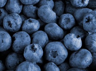 Bilberry berries close up as a background for design