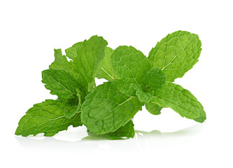 mint on white background