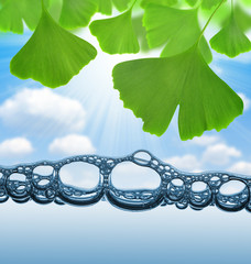 ginkgo biloba leaves above the water level