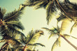Leinwanddruck Bild - Coconut palm trees and shining sun over bright sky