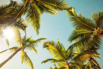 Coconut palm trees and shining sun over bright sunny sky