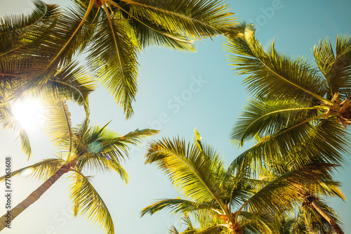 Papiers peints Arbre Coconut palm trees and shining sun over bright sunny sky