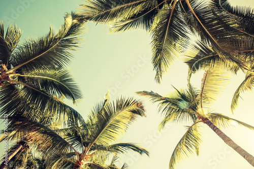 Foto Spatwand Bomen Coconut palm trees and shining sun over bright sky