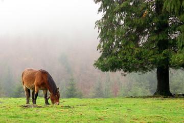 horse grazing near a tree