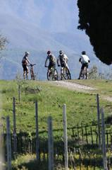 Ciclisti in Valtenesi