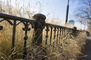 Iron fence and yellow grass