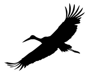 Crane flying.  Vector silhouette