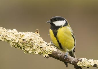 Pájaro en la naturaleza