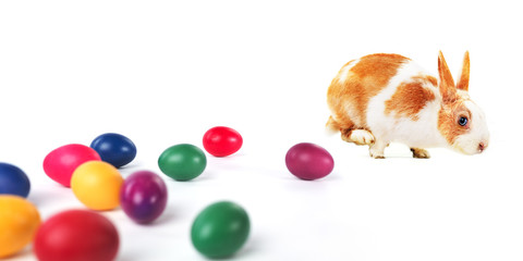 Colored eggs and Easter bunny